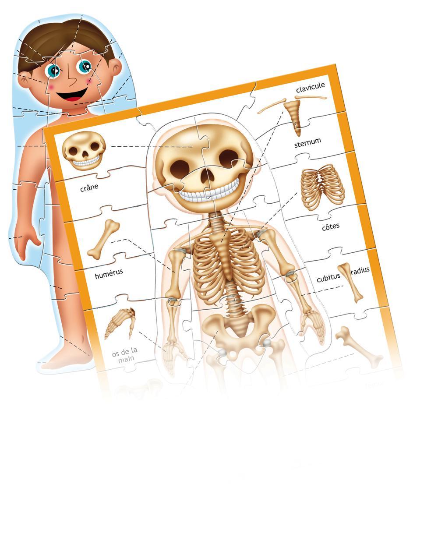 Apprenons Le corps humain