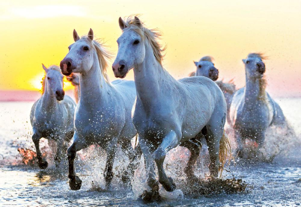 1000 pieces puzzle White horses at sunset